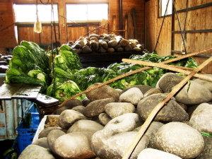 広島菜工場