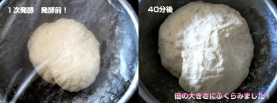 ホワイトブレッド|一次発酵