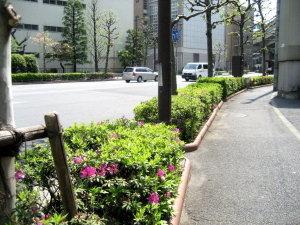 道端のお花たち ~つつじ~