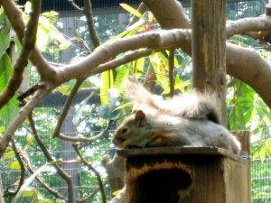 りす、りす、リス ~squirrel~