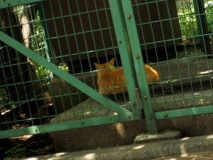東京♡浜松町のネコたち