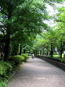 東京♡浜松町の並木道