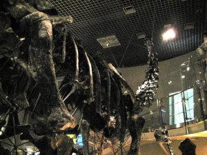 上野♡国立科学博物館