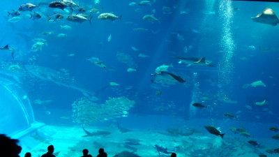 沖縄☆美ら海水族館に行ってきました♪