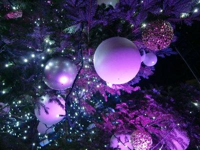 赤坂のクリスマスツリー