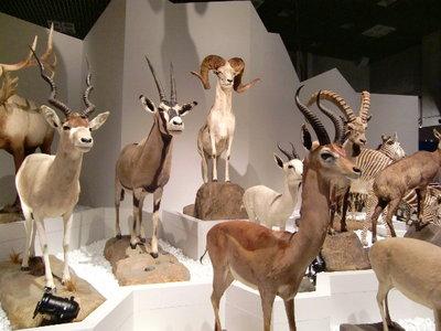上野★科学館「大哺乳類展」