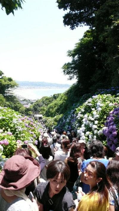 極楽寺・成就院の紫陽花♪